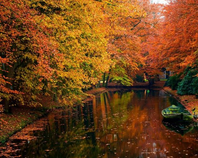 autum_trees_nature_landscape_leaf_leaves_2560x2048